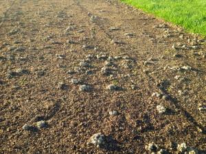 i coni di terra prodotti dai lombrichi