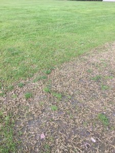 villagegreen vs bermudagrass