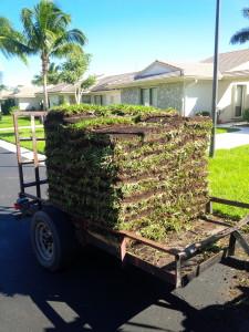 Ecco come si consegna il prato di Stenotaphrum in Florida