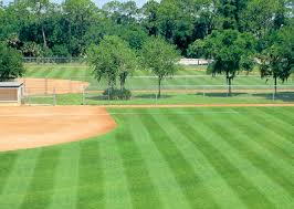 Paspalum vaginatum , Campo da Baseball in USA
