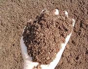 Top soil da mettere sopra il prato dopo arieggiatura meglio senza torba ma con compost non oltre il 35%